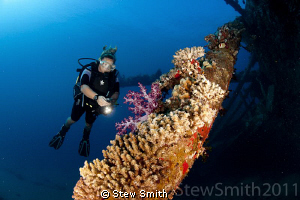 A diver inspects the beautiful corals growing on one of t... by Stew Smith 